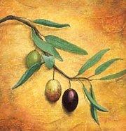symbol of athena olive tree wwwpixsharkcom images
